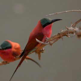 Zuid-Afrika - Natural Birder's Paradise