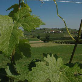 Italië - Piemonte & Langhe